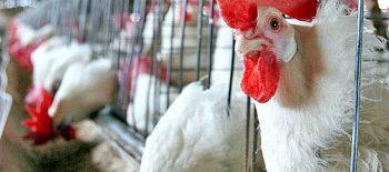 granja aviar seguros natalia plaza agente en vilanova i la geltru agroseguro