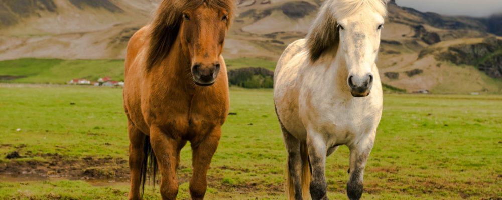 granja caballos seguros natalia plaza agente en vilanova  i la geltru agroseguro