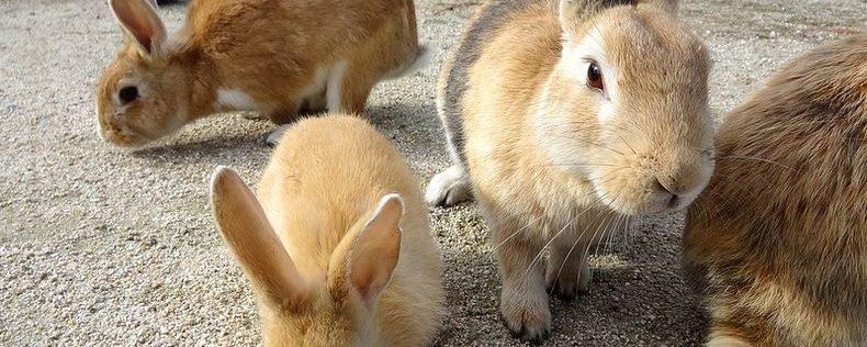 granja conejos seguros natalia plaza agente en vilanova i la geltru agroseguro