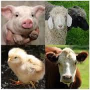 seguro ganadería agroseguro (retirada de cadáveres)