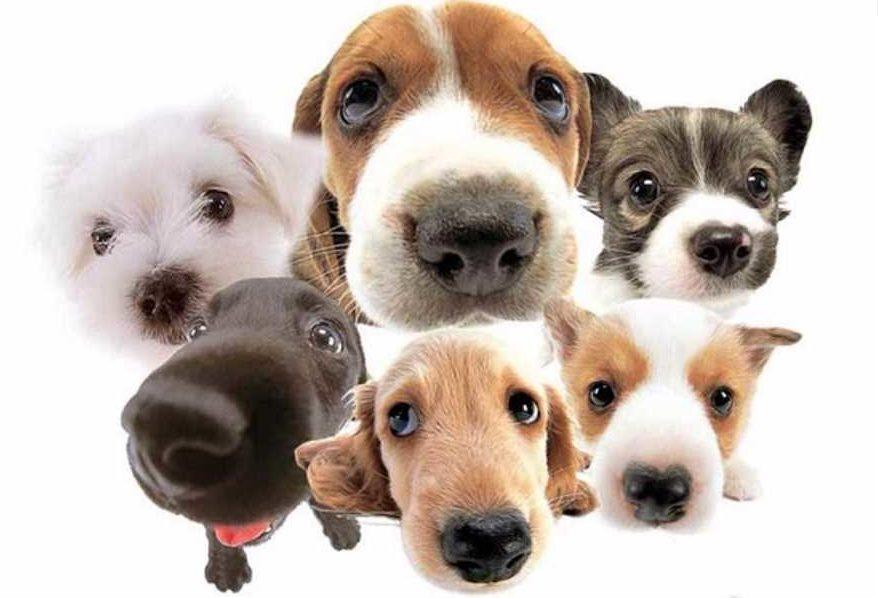 seguro para mascotas segurosnataliaplaza.com