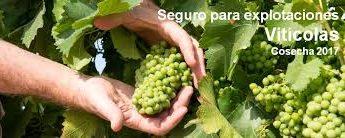 seguro para viñas cepas plantones seguros natalia plaza agente en vilanova i la geltru agroseguro