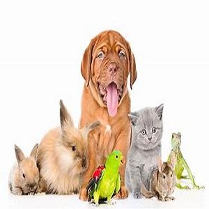 contratar seguro animales de compañia