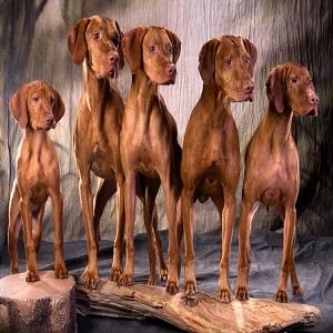 contratar seguro perros de caza